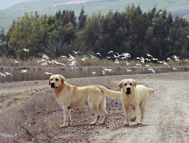 קייטנת קיץ ילד וכלבו